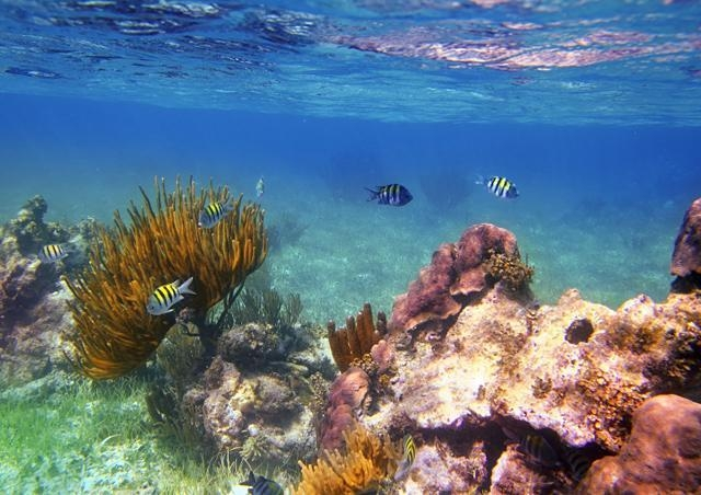 Patch Reef between the Island and the Barrier reef. - Yardley House Rental Bonefish Fishing Scuba and Skin Diving