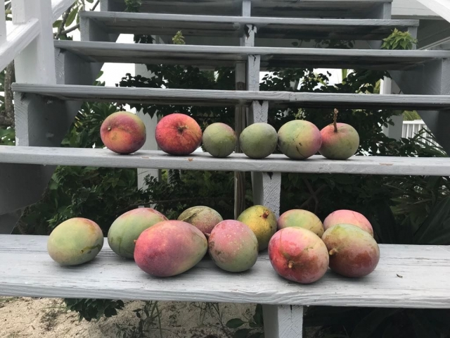Andros Mangos - Fresh Creek Adventures